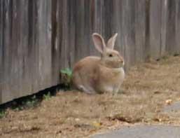 mr-bunny