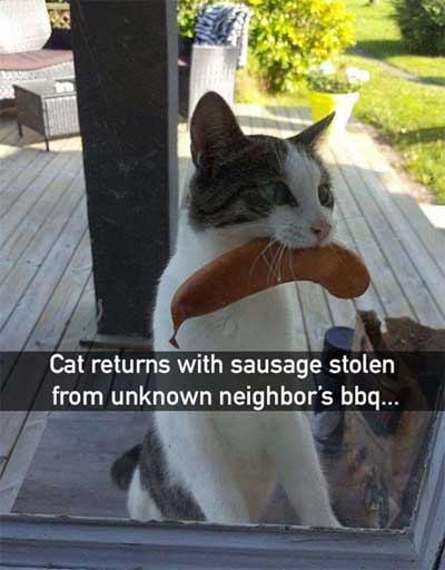cat-with-sausage-400px