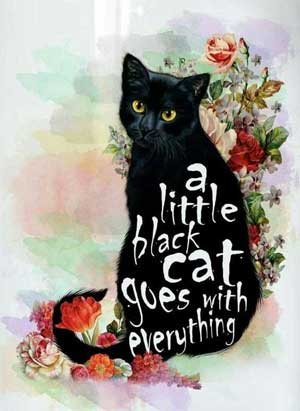 black-cat-everything-300px