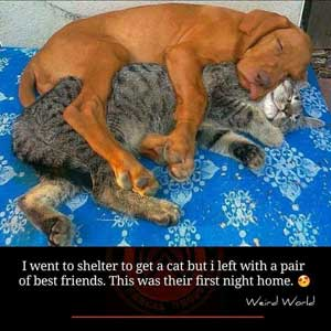 dog-and-cat-300px