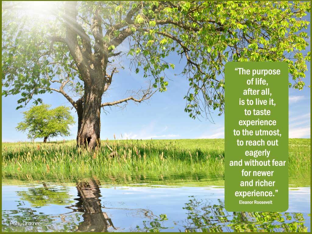 Eleanor-Roosevelt-quote
