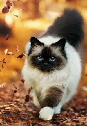 fall-cat-walk-300px