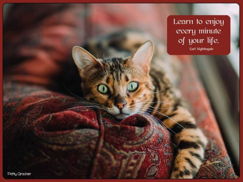 Cat-with-quote-1