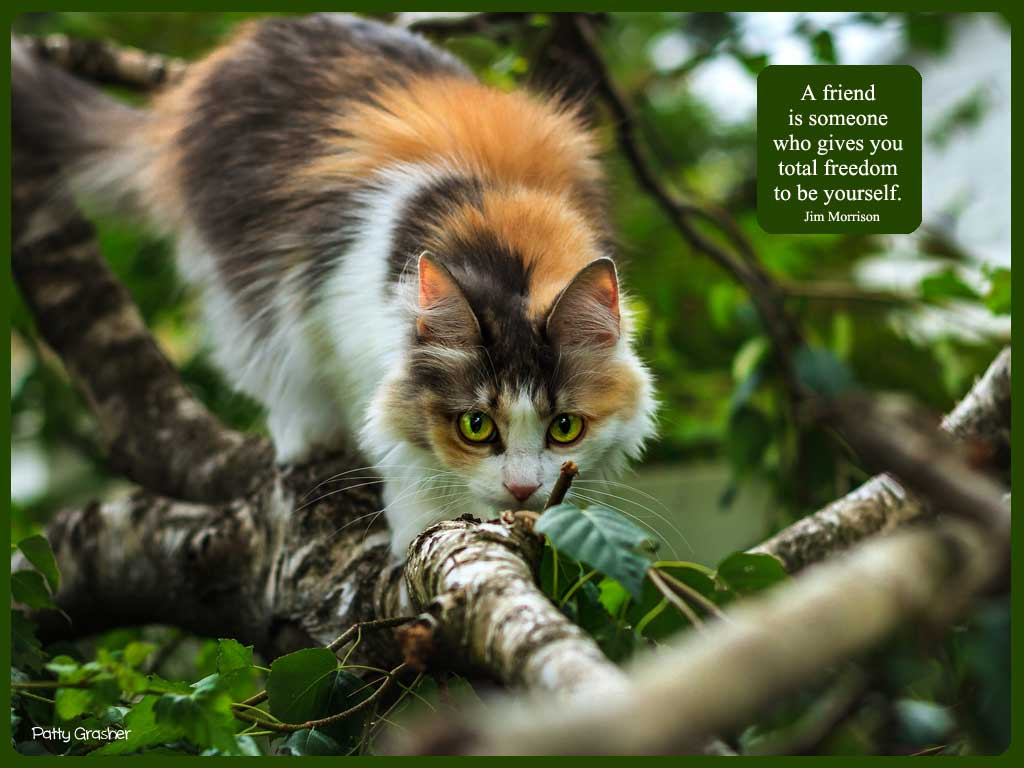 Cat-with-quote-4