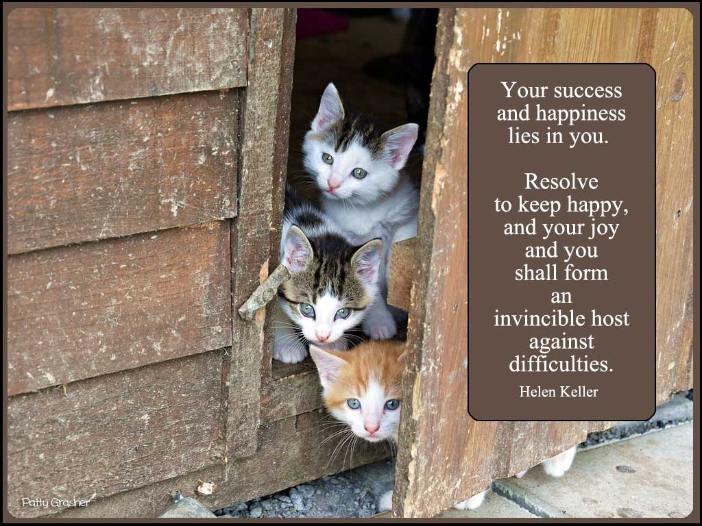 Cat-with-quote-5