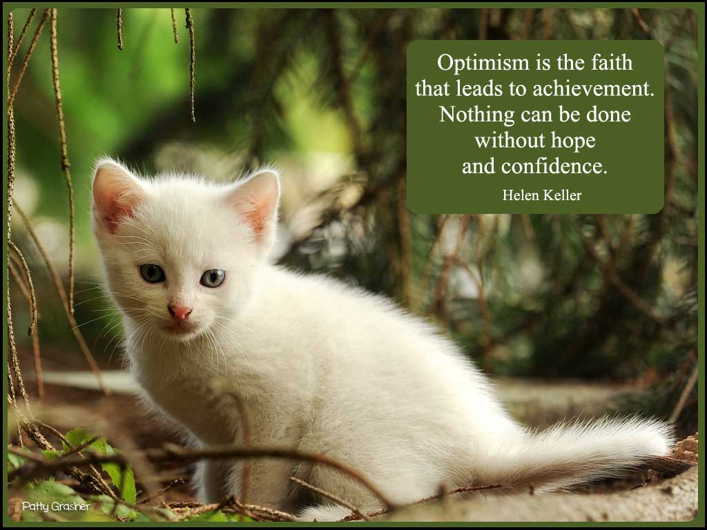 Cat-with-quote-6