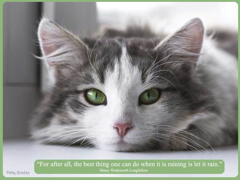 Beautiful cat with green eyes