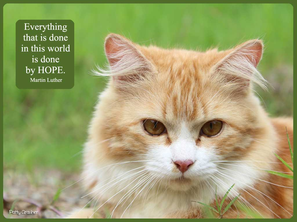 Cat-with-quote-7