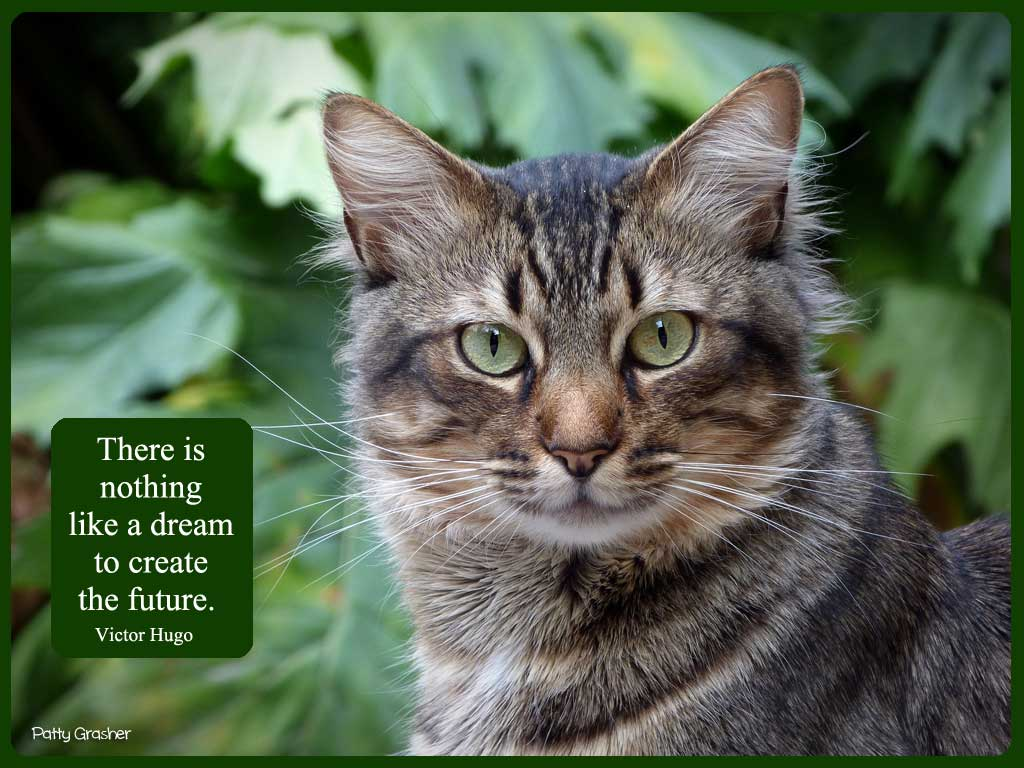 Cat-with-quote-8
