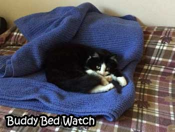 buddy-bed-watch