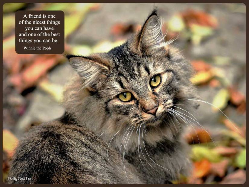 cat-with-quote-12