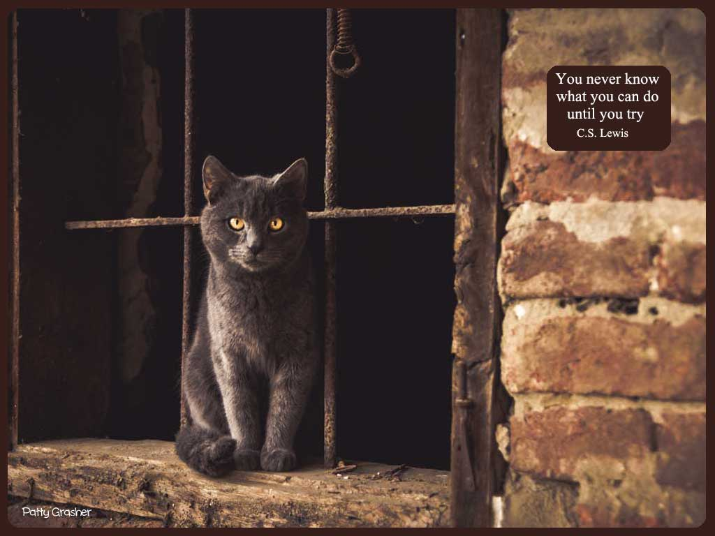 cat-with-quote-13