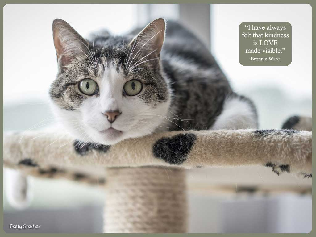 cat-with-quote-19