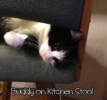 buddy-on-counter-stool-2