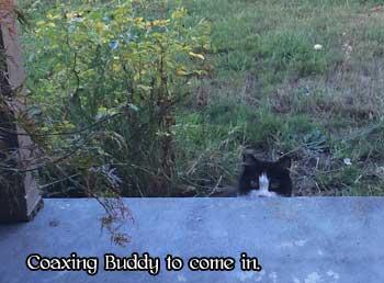 buddy-peeking-over-porch