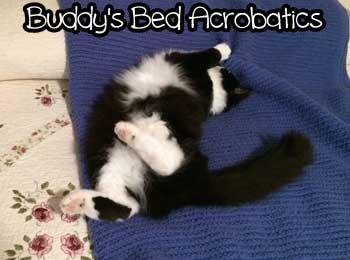 Buddys-bed-acrobatics