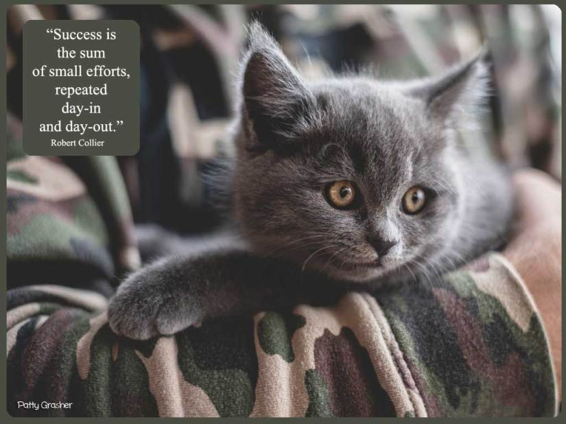 Cat-with-quote-20