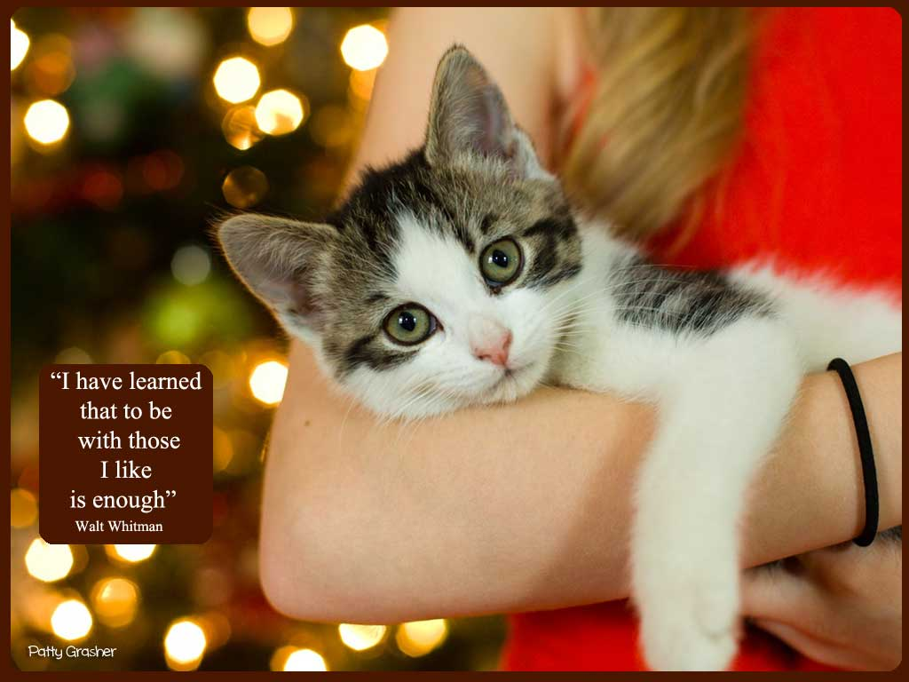 Cat-with-quote-22