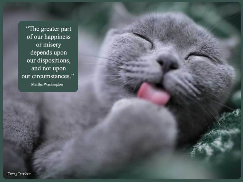 Cat-with-quote-23