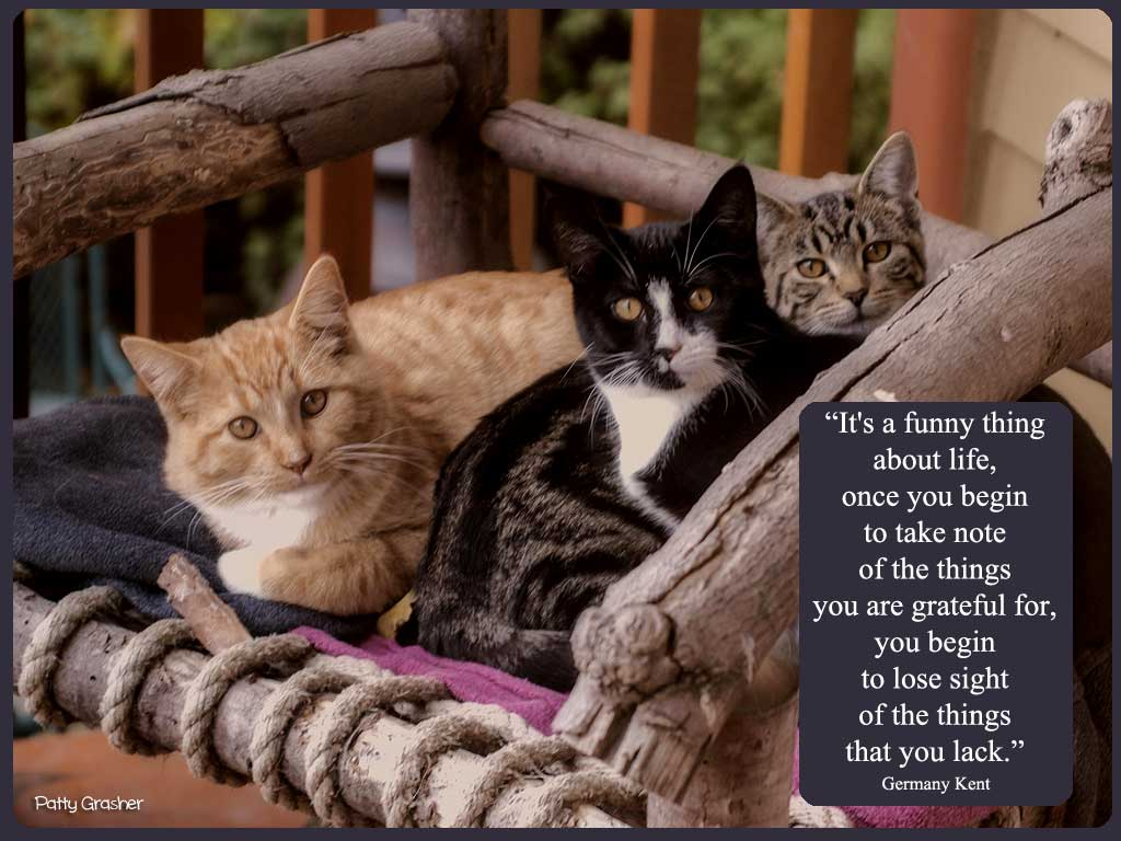 Cat-with-quote-24