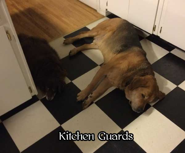 kitchen-guards